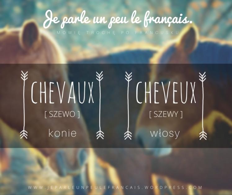 konie-wlosy-pary-wyrazow
